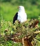 Birding Fees to Reduce in Uganda